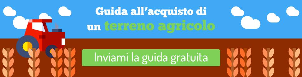 banner-masthead-noi-siamo-agricoltura-terreno-agricolo